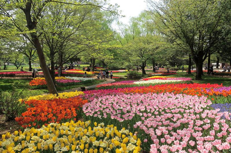 4 flower gardens in bloom year-round